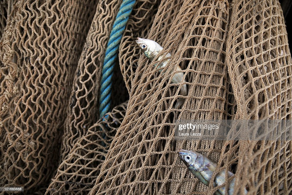Eu regulations become effective for mediterranean for Small fishing net