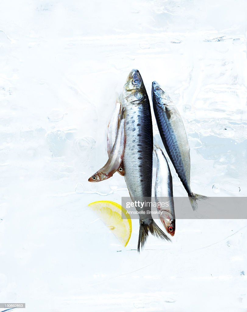 Small Fish on Block of Ice with Lemon Slice : Stock Photo