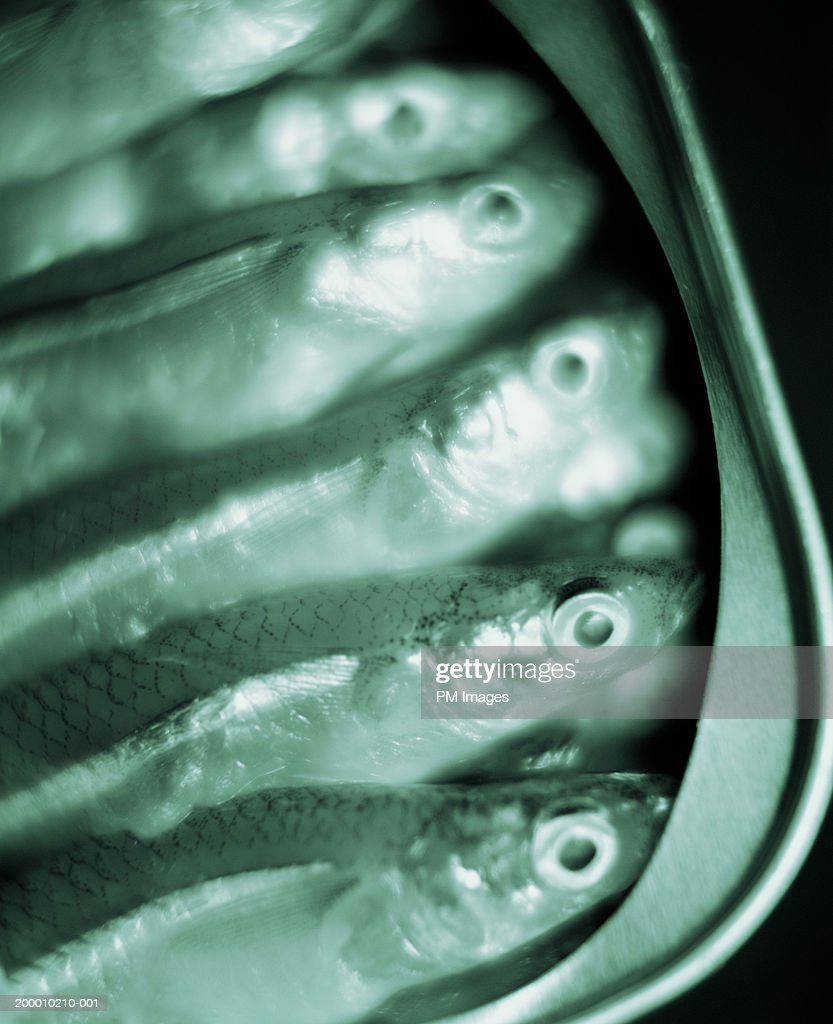 Small fish packed in can, close-up (B&W) : Stock Photo