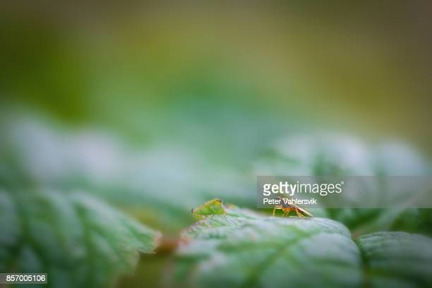 Small fly on a leaf