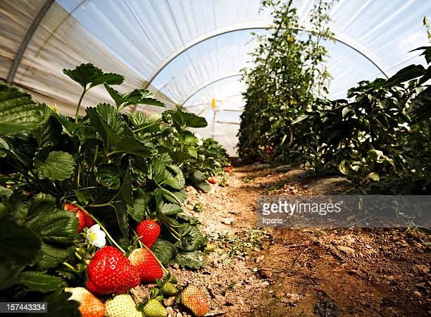 """Kleine """"Greenhouse"""
