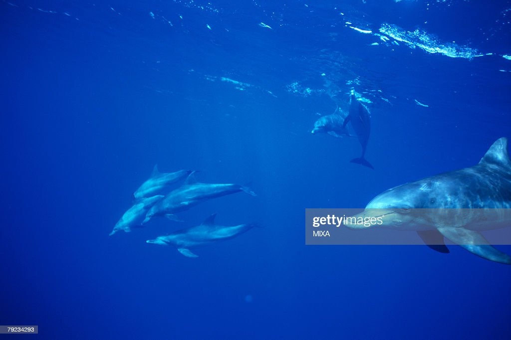 Small group of dolphins swimming underwater : Stock Photo