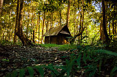Small Hut in forest