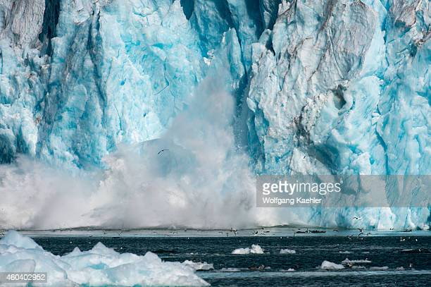 Small icebergs calving from the face of the LeConte Glacier a tidal glacier in LeConte Bay Tongass National Forest Southeast Alaska USA
