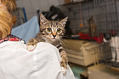 Small, frightened kitten into the hands of the physician of the shelter for homeless animals