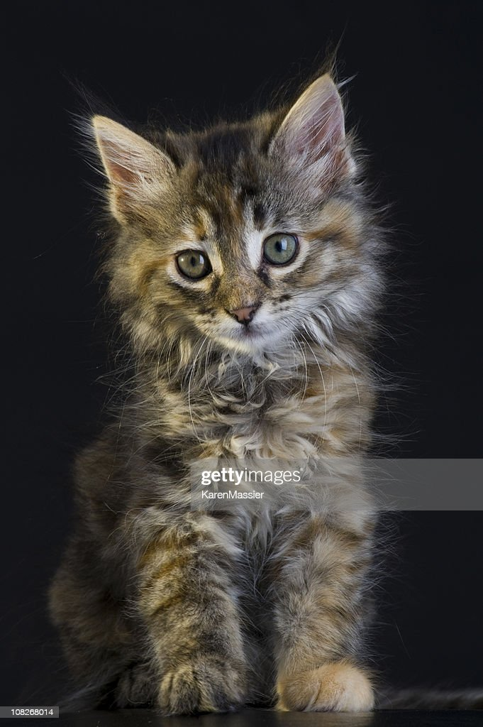 Small Kitten : Stock Photo