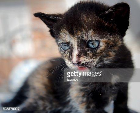 小さなキトンに青い目が悲しげ : ストックフォト