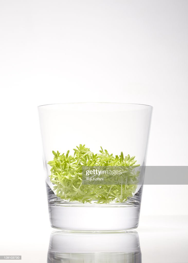 Small leaf in the glass : Stock Photo