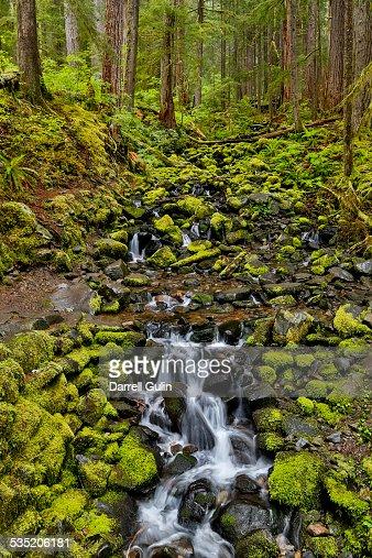 Small moss laden Stream Sol Duc Rainforest
