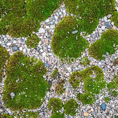 Small Multicolored Pebbles And Moss Texture For Background Top View Stock Photo