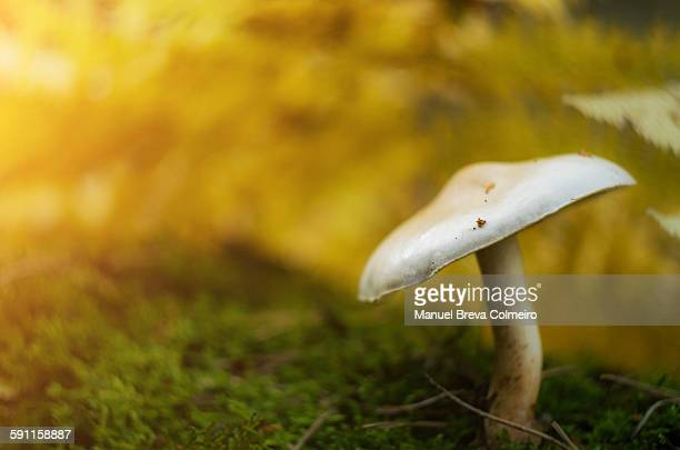 Small mushroom in the forest