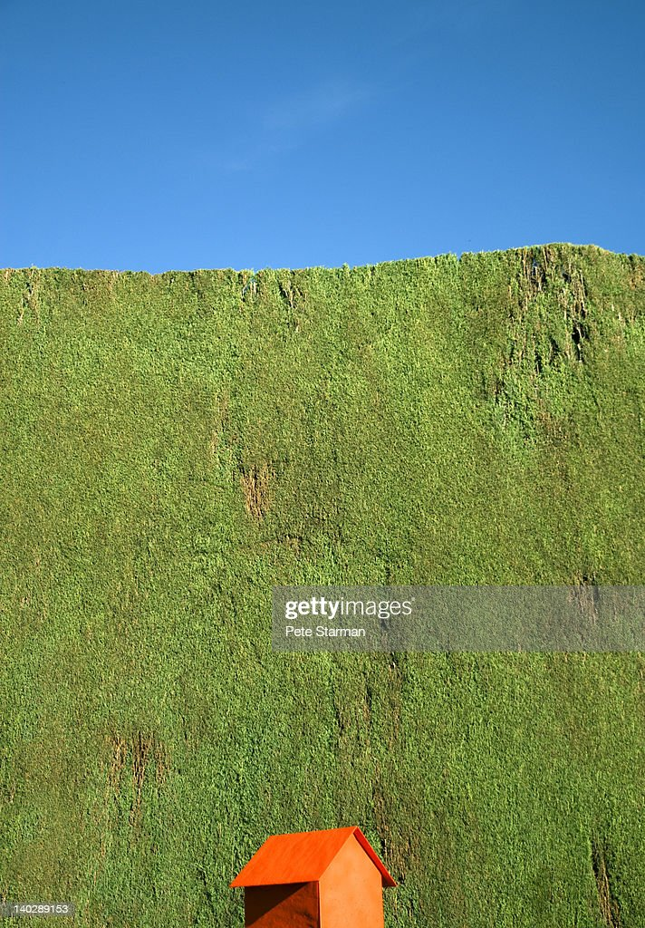 Small orange house against green hedge. : Stock Photo