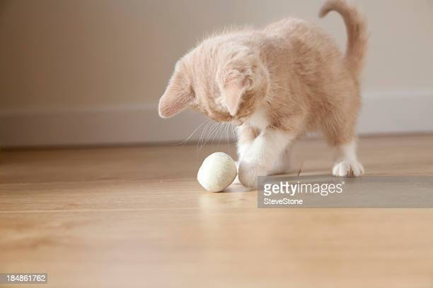 Small pale ginger and white kitten playing with ball