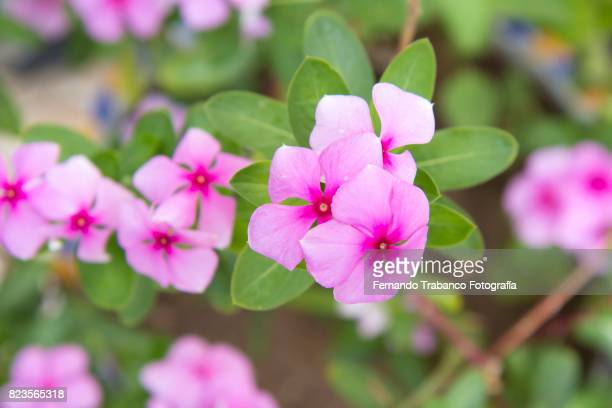 small pink flowers in spring