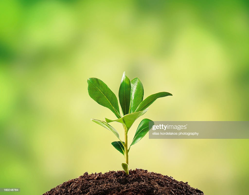 Small plant isolated