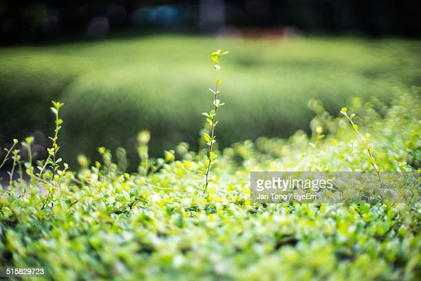 Small Plants Growing On Grassy Landscape