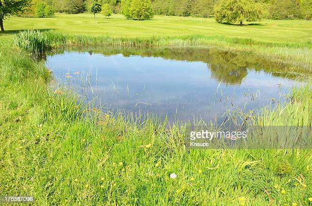 Small pond in the middle of a green field with long grass