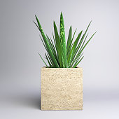 Small Potted Plant - Aloe Vera in a Cube Pot isolated on a Studio Background. 3D rendering