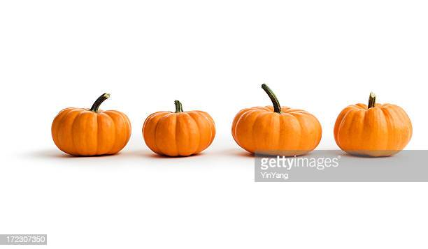 Small Pumpkins, Autumn Squash Vegetables in a Row on White