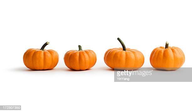 Kleine Kürbisse und Herbst Kürbis Gemüse in einer Reihe auf Weiß