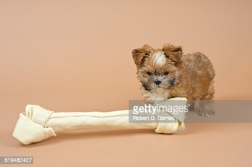 Small Puppy and Big Bone