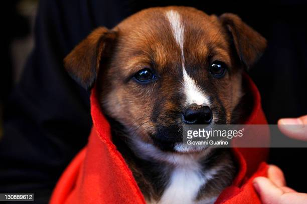 Small puppy dog dressed red