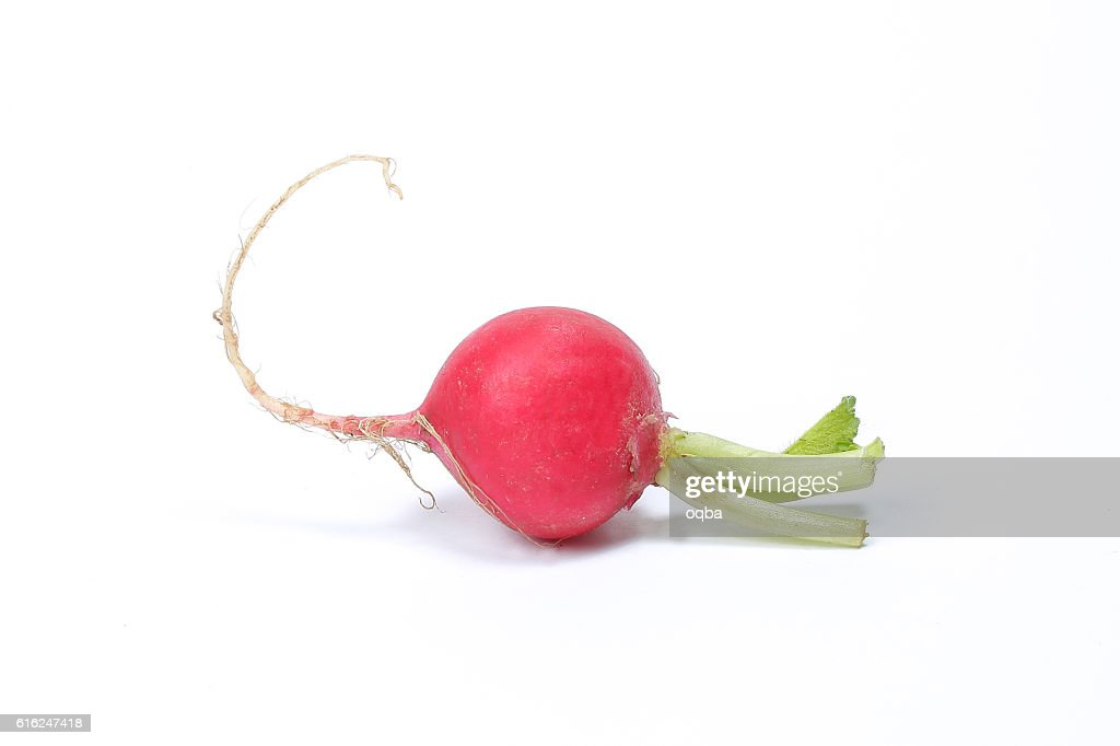Small red radish : Stock Photo