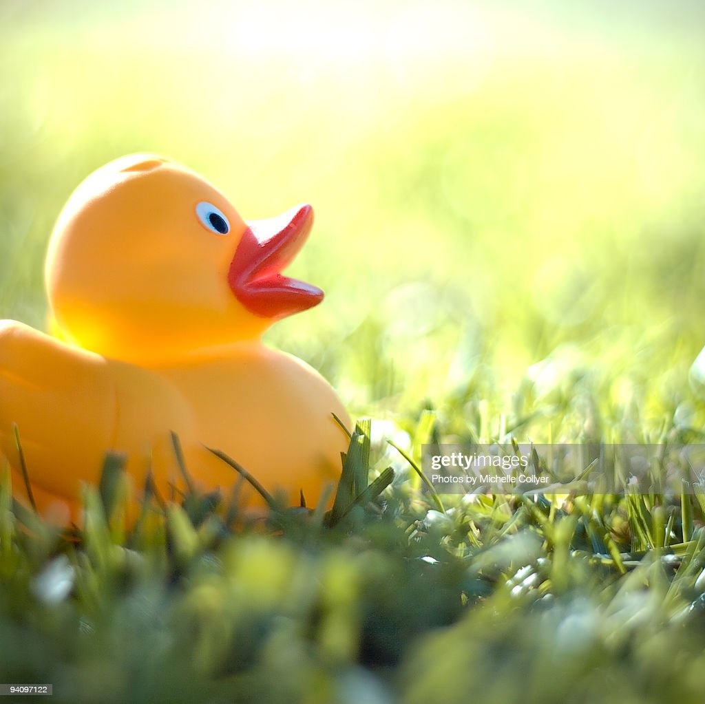 Small Rubber Duck Stock Photo | Getty Images