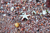 Small sea star on sand macro photo at the seashore
