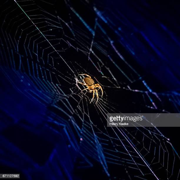 Small spider on blue web