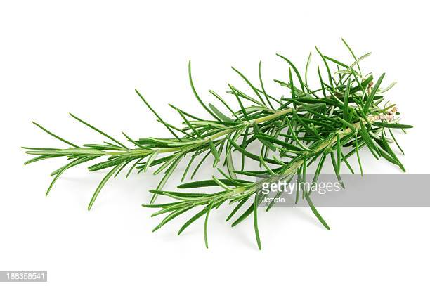 Small sprig of Rosemary herb isolated on a white background.