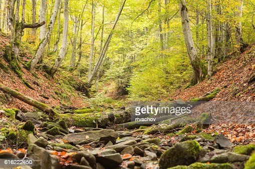 Small stream in autumn beech forest. : Stock Photo