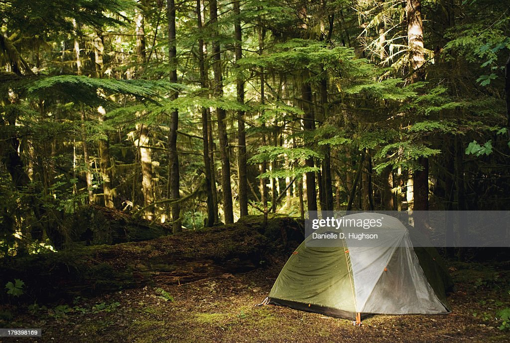 Small Tent And Campsite In Forest