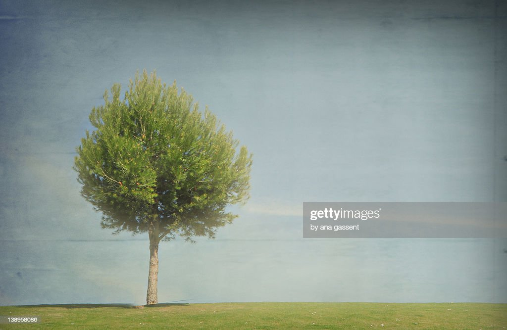 Small tree alone on green grass against sky : Stock Photo