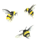 3 small watercolor bees isolated on white
