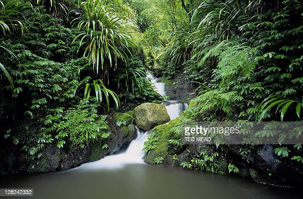 small waterfall in world heritage area rainforest, lamington national park, queensland