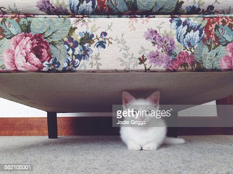 Small white kitten hiding beneath a floral couch