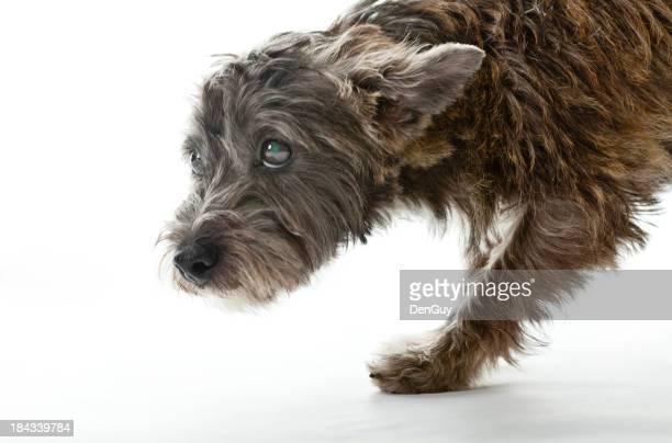 Kleine besorgt, die gemischte Breed Dog