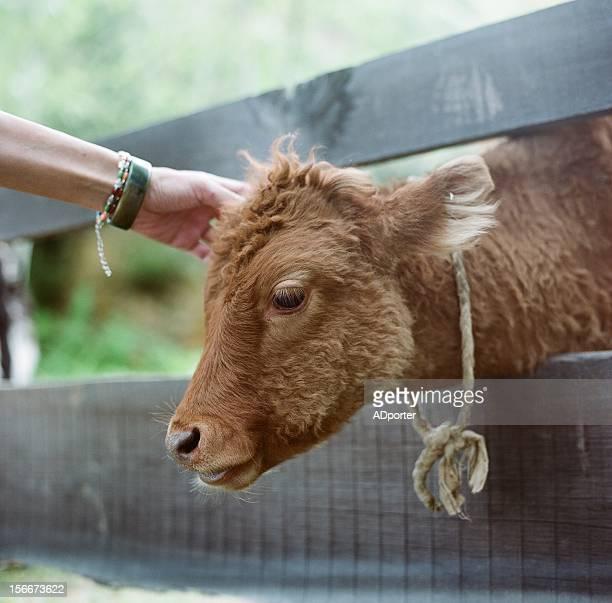 Small yak