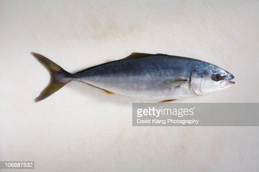 small yellowfin tuna