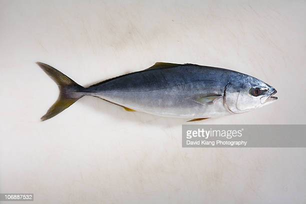 small yellowfin tuna