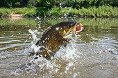 chug bait on jumping smallmouth bass