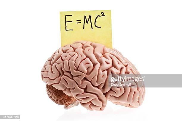 Smart cerebro
