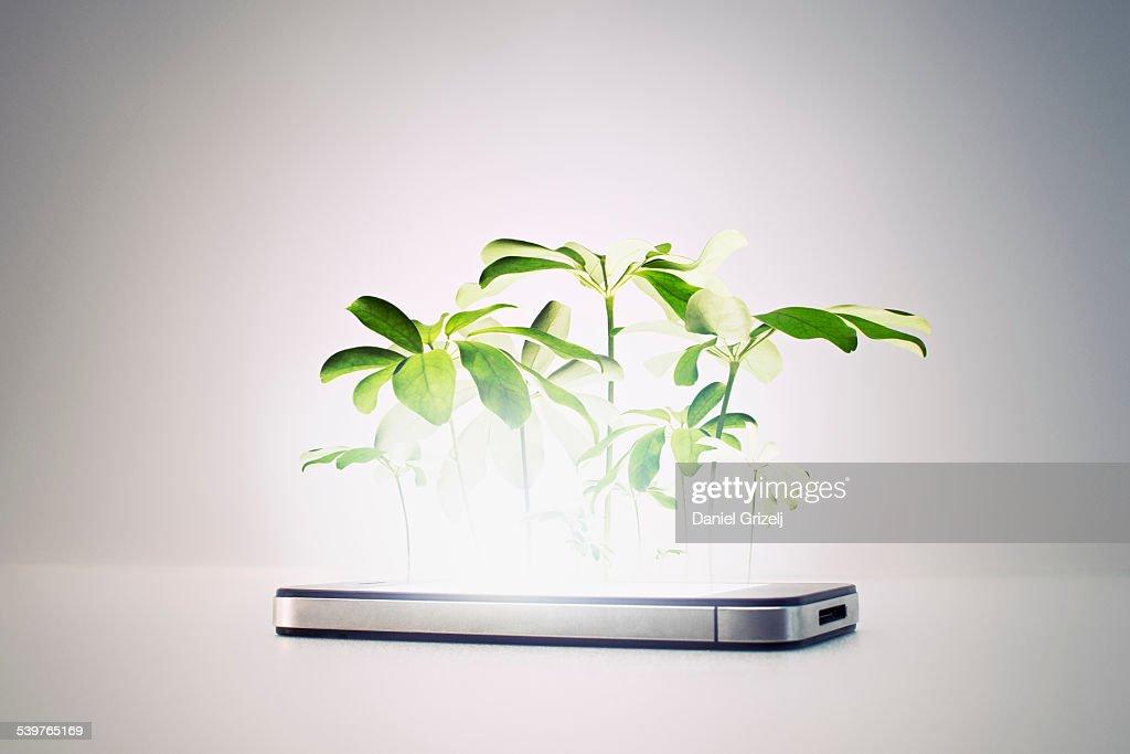 Smart phone : Stock Photo