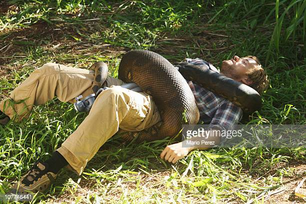 Anaconda Snake Stock Photos And Pictures Getty Images
