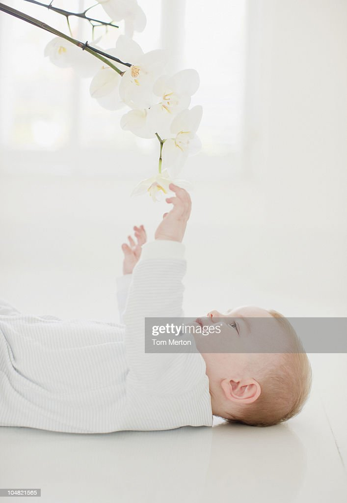 Smiling baby laying on floor and reaching for orchid overhead : Stock Photo