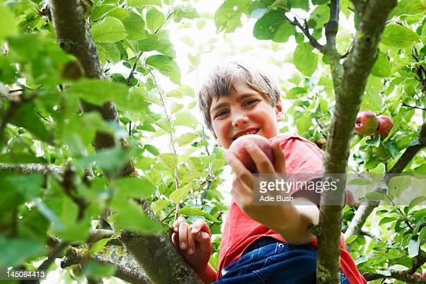 Souriant garçon cueillir des fruits dans tree