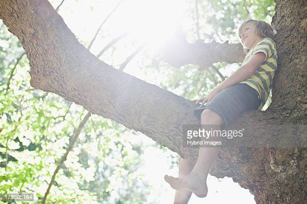 Smiling boy sitting in tree