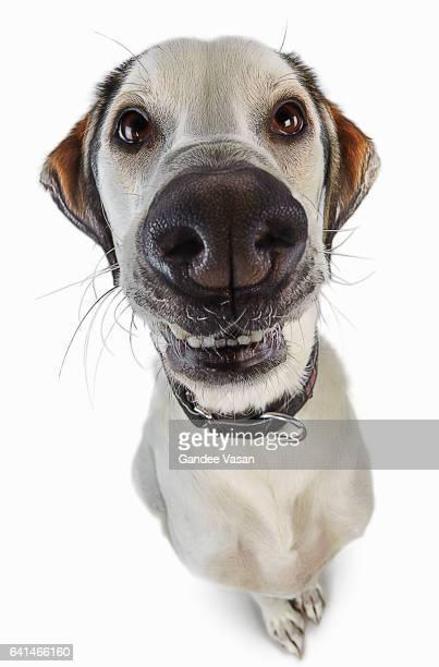 Smiling Cartoon Dog