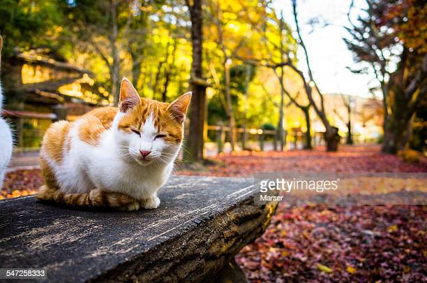 A smiling cat on the bench